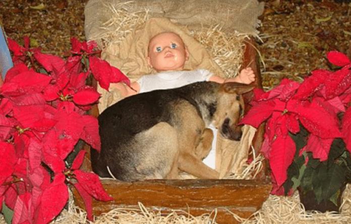 Dog in manger, photo by Kiko Della Giustina