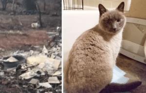 Courtney Werblow, Timber cat, Camp Fire