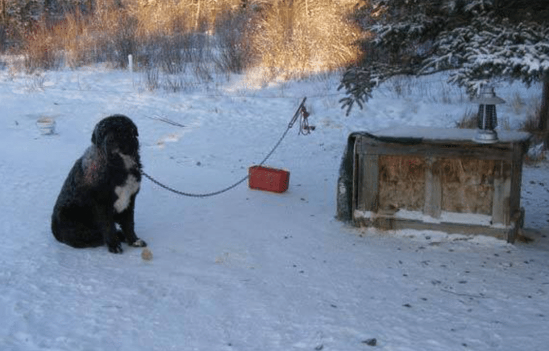 Diesel was tied here for four years to suffer alone.