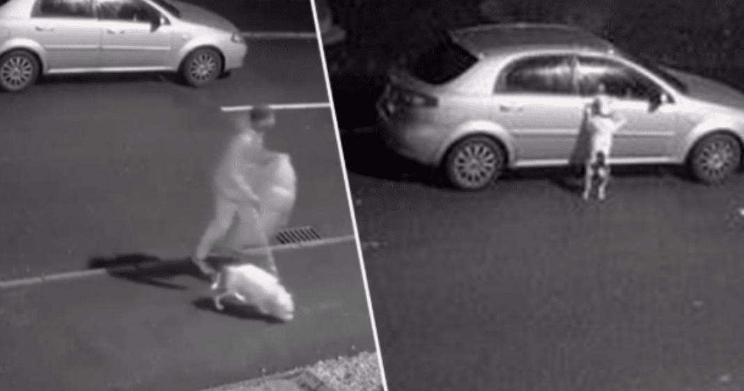 Dog Desperately Tries To Jump Back Into Car As Cruel Owner Dumps Him On The Side Of The Road