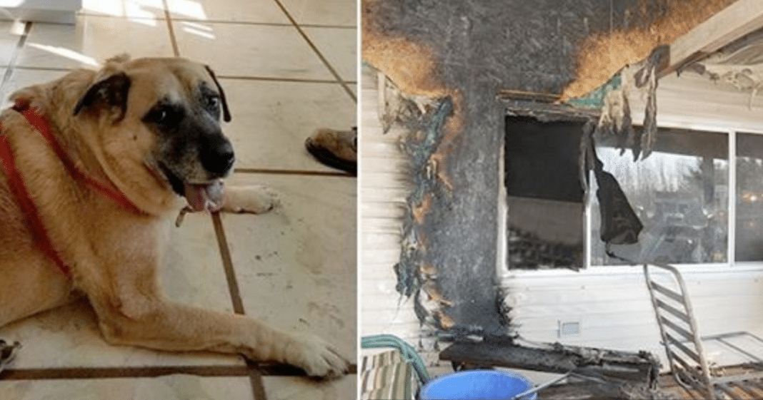 House Tragically Burns Down In Fire, 2 Months Later Dog Finds Missing Family Member Under Floorboards