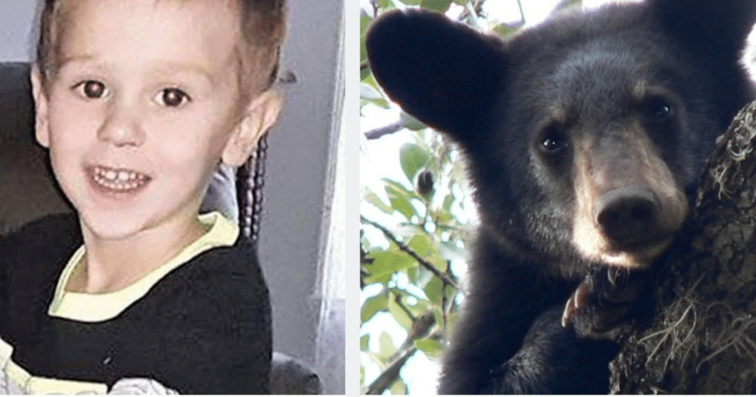 """3-year-old boy found alive after vanishing in woods says he: """"hung out with a bear for two days"""""""