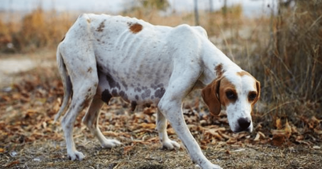 New law would make animal cruelty a federal felony