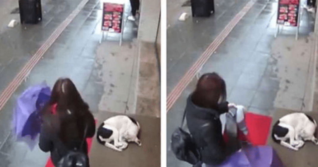 Wet, frozen dog tries to take shelter: then a stranger's actions are caught on camera – go viral
