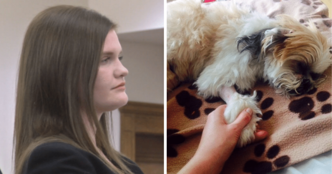 Groomer accused of strangling pets says she should still be allowed to work with animals