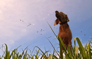 Dog looks at the dreamy blue sky