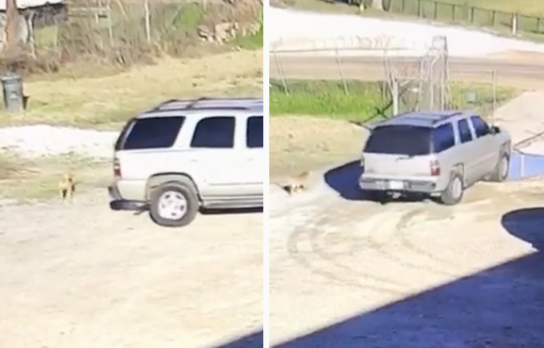 Heartbreaking moment terrified dog chases after owner's car after being abandoned