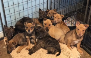 Puppies caught near the Animal Rescue Fund of Mississippi