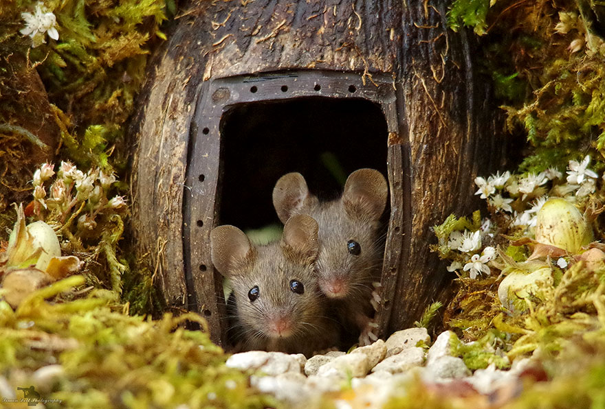 Man Discovers Tiny Family Of Mice In His Garden, So He Builds Them Their Own Village