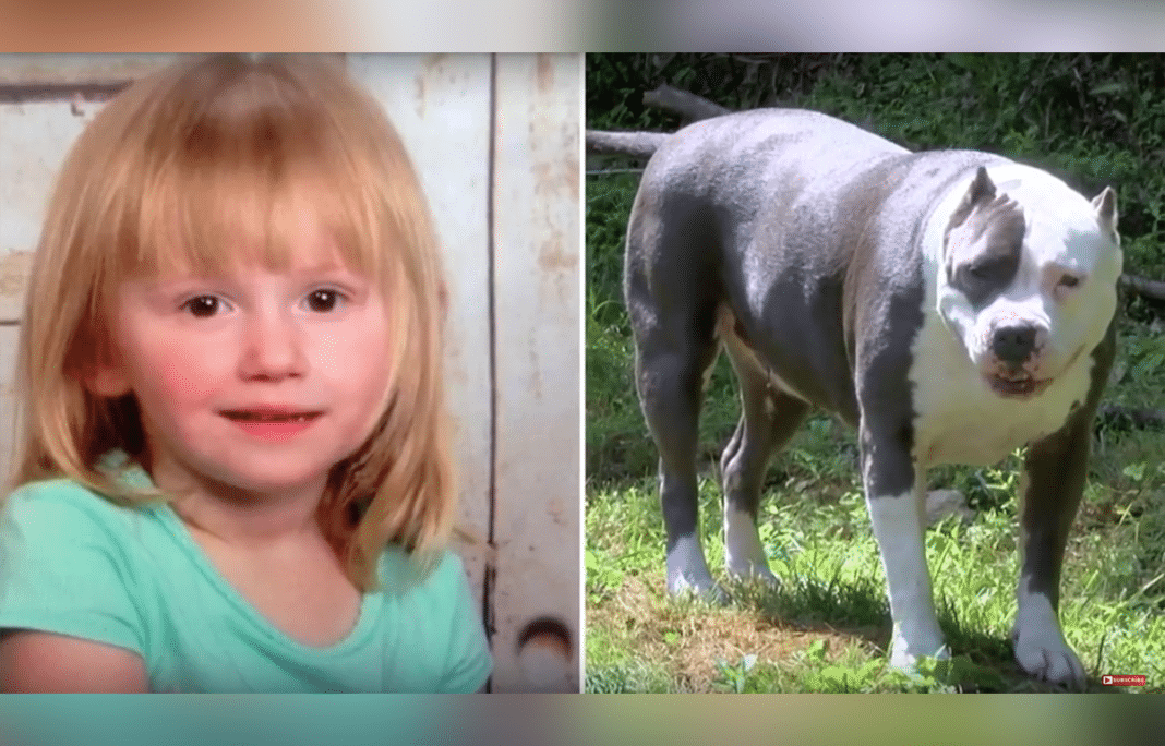 Age 2 girl disappears for almost two days – then the family pit bull comes out of the woods