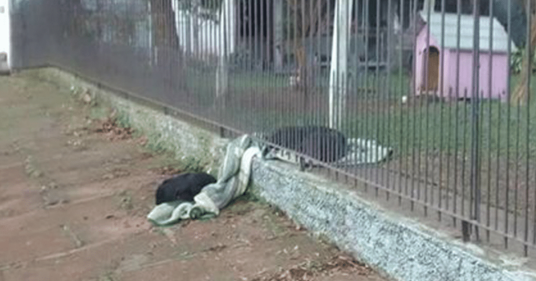 8-month-old puppy drags her own new blanket outside to share it with a cold homeless dog