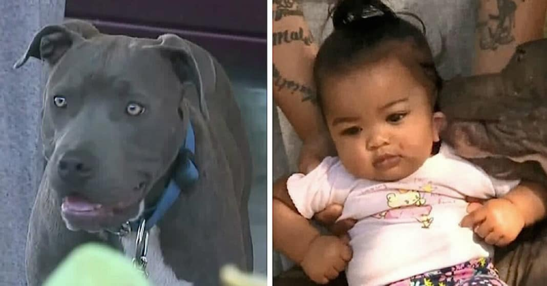 House goes up in flames, then mom finds family pit bull dragging 7-month-old baby by her diaper