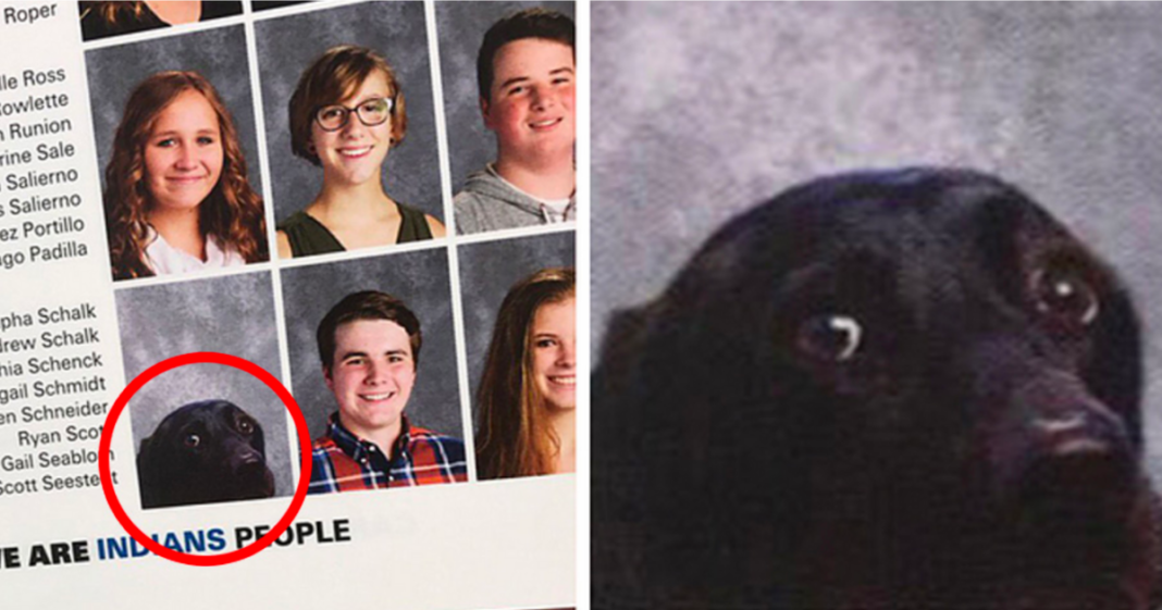 School Includes Teen Student's Service Dog In Its Yearbook – And It's Just Adorable