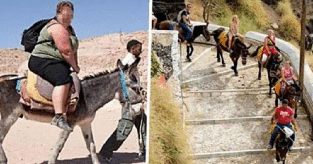 Donkeys are being left bloody, crippled and suffering in agony – all for the pleasure of tourists