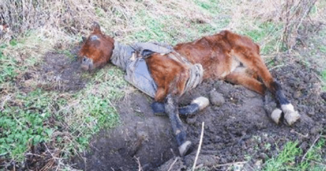 Emaciated horse found near-death in field, but wait until you see her astonishing recovery 6 months later