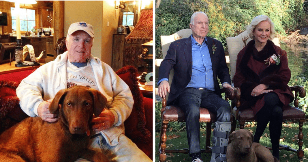 Just months after John McCain's death, family rocked by tragic death of his beloved dog