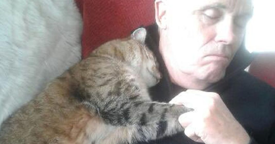 Man recovering from an operation wakes up to cat snuggling him – he doesn't own a cat