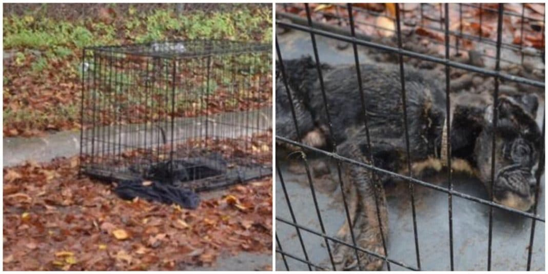 Police get call about 'dead' dog left in crate. Cop inspects body and isn't prepared for what she finds