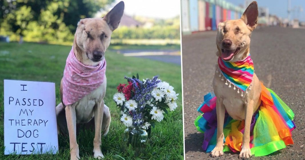 Pregnant dog who was blinded, had ear cut off, and shot 17 times has now qualified as a therapy dog