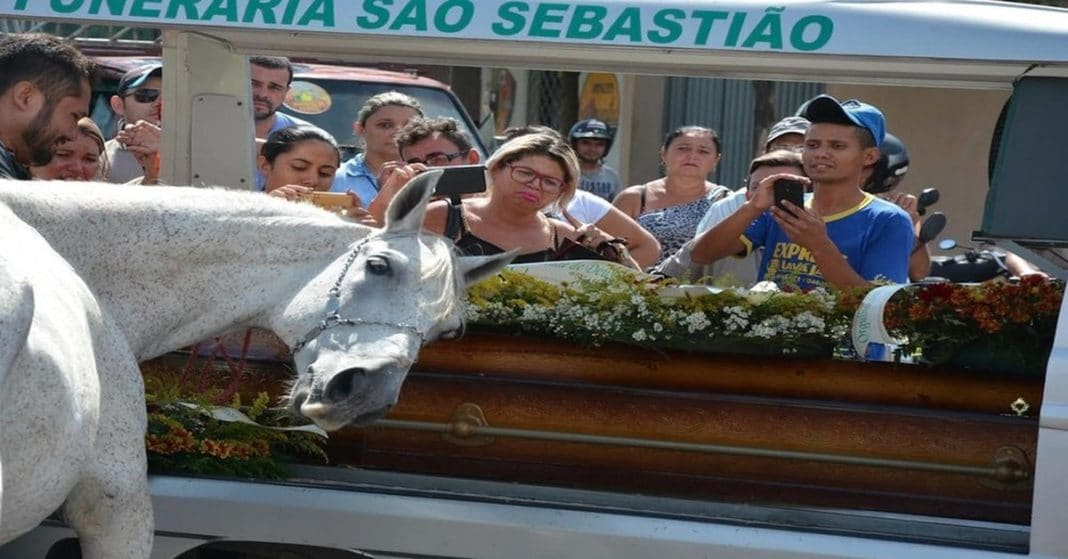 Horse lays head on coffin, gives touching farewell to human best friend before he's laid to rest