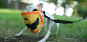 halloween skeleton dog with a jack o lantern face mask