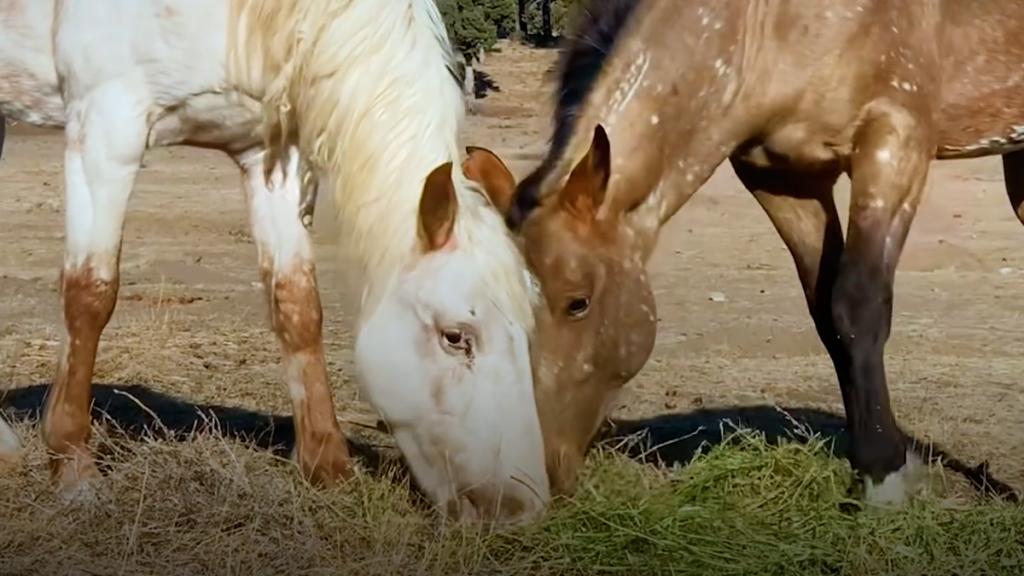 American Mustang, Phoenix and Ghost, Skydog Ranch