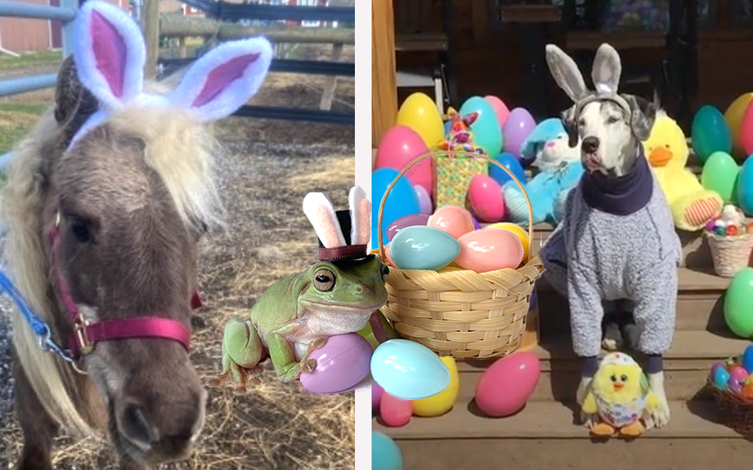 How Cute Are the Cadbury Bunny Finalists for This Year?